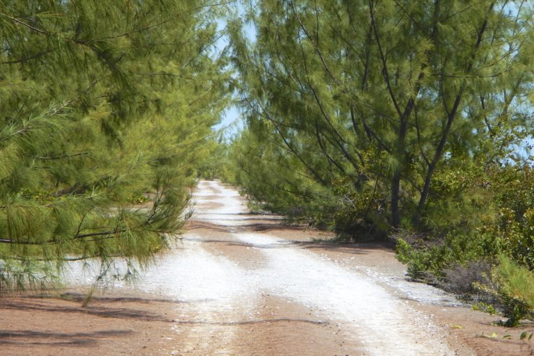 The road to Wild Cow Run, Middle Caicos
